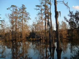 The Bayou near Lake Charles.
